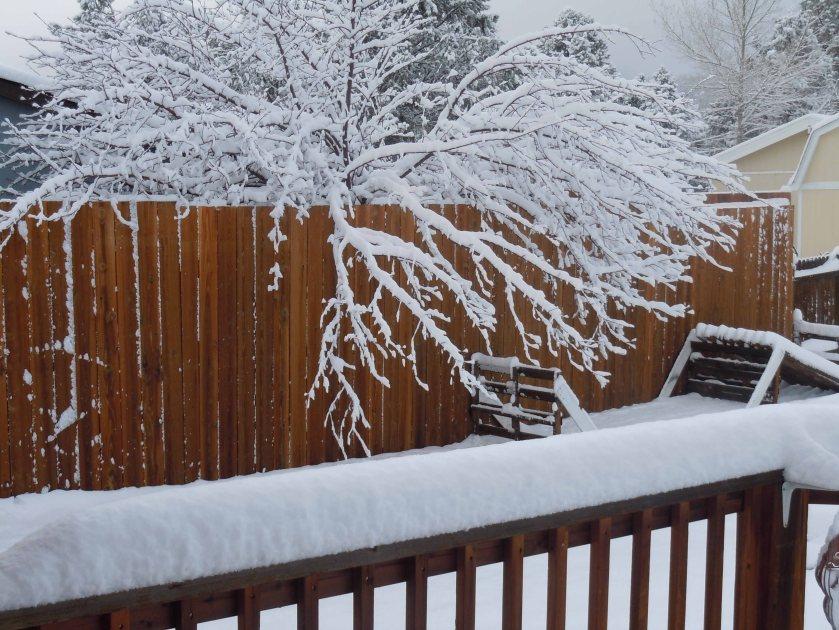 Snow 2013-1