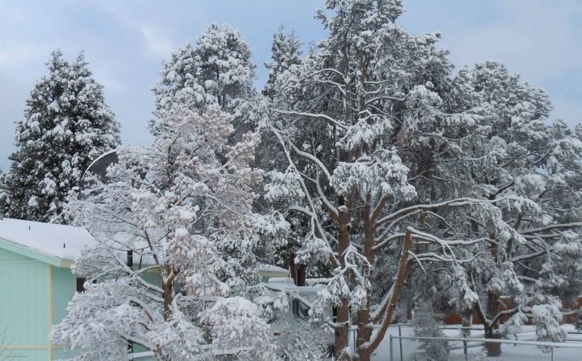 Snow 2013-2